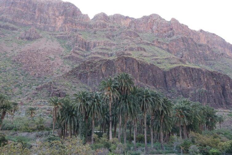 Arteara - Valle mil palmeras