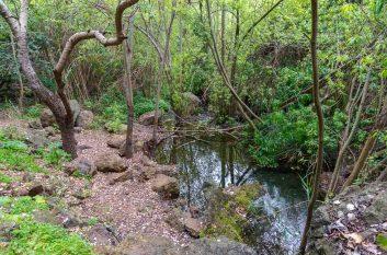 Firgas - Barranco de Azuaje